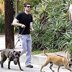 Adam Brody walking dogs 19051
