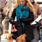 Blake Lively brings Ryan Reynold's dog to the set of Gossip Girl in NYC 100669