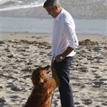 George Clooney shoots a commercial with a dog in Malibu 114693