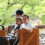 David and Victoria Beckham take Harper Seven and their boys to Disneyland 116798