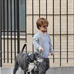 Peter Dinklage walks his dog in New York 84901