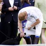 Prince Harry plays with Lupo at the Audi Polo Challenge 114416