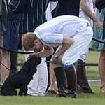 Prince Harry plays with Lupo at the Audi Polo Challenge 114419