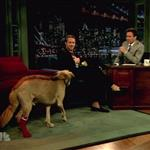Ryan Gosling on Late Night with Jimmy Fallon with his dog George  90450