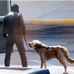 Ryan Gosling walks his dog on location in Detroit for the Ides of March  81375